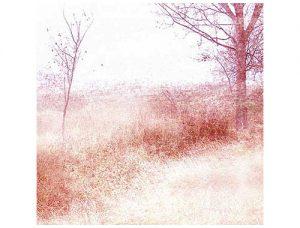 Into the stillness, 2005, inkjet print on canvas, 60 x 60 cm